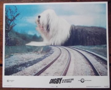 Digby the Biggest Dog in the World, Original Lobby Card #5, Jim Dale, '74
